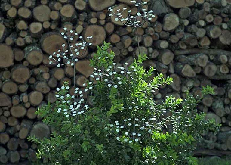 Ombellifère en métal recyclé. Arrosoir & Persil. Zimbabwe.