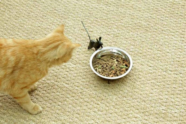 Gamelle- souris... pour chat !. Métal recyclé. Arrosoir & Persil. Zimbabwe.