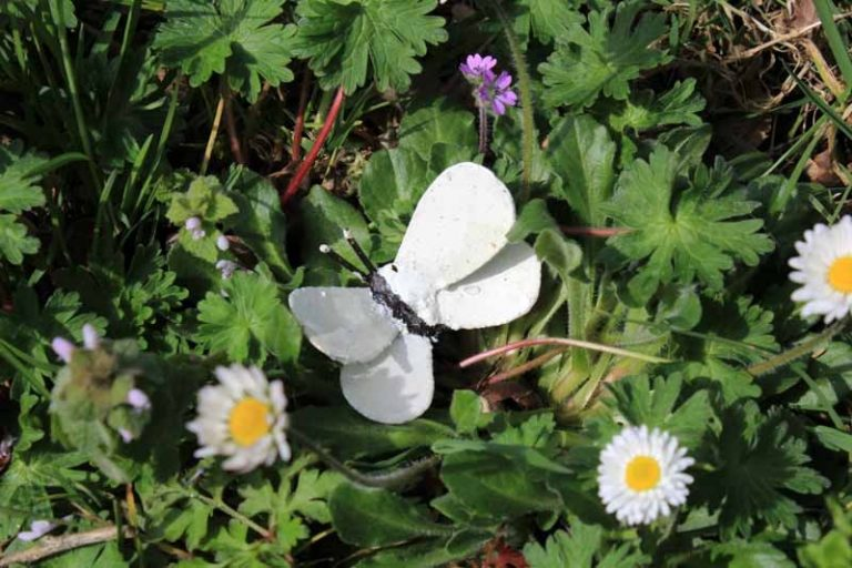 Papillon jaune à fixer. Métal recyclé peint. A & P
