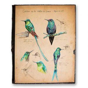 """""""Colibris"""". Reproduction signée, sur Papier d'art. Stéphanie Ledoux."""
