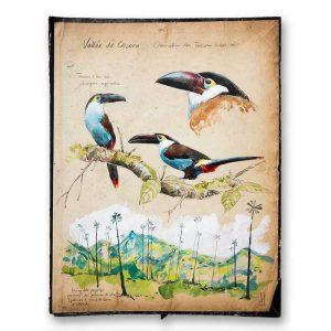 """""""Toucans de la Vallée"""". Reproduction signée, sur Papier d'art. Stéphanie Ledoux."""